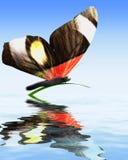 Farfalla su acqua Fotografia Stock Libera da Diritti