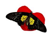 Farfalla su cuore immagine stock