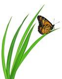 Farfalla su erba Fotografia Stock