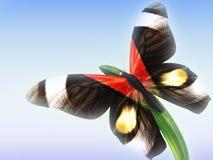 Farfalla su erba Immagine Stock