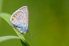 Farfalla su erba Fotografie Stock Libere da Diritti
