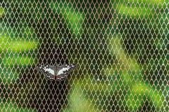 Farfalla su fondo reticolato Fotografia Stock Libera da Diritti