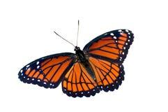 Farfalla su priorità bassa bianca Immagini Stock Libere da Diritti
