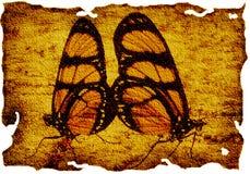 Farfalla su tela di canapa Immagine Stock