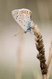 Farfalla su terra asciutta Fotografie Stock Libere da Diritti