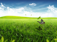 Farfalla su un'erba Immagini Stock Libere da Diritti