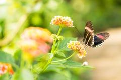 Farfalla su un fiore fotografie stock