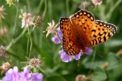Farfalla su un fiore Fotografie Stock Libere da Diritti