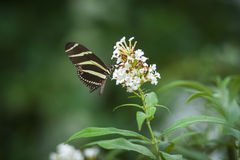 Farfalla su un fiore Fotografia Stock Libera da Diritti