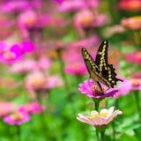 Farfalla su un fiore immagine stock libera da diritti