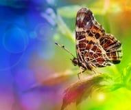 Farfalla su un foglio Fotografie Stock