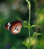 Farfalla su un foglio Immagini Stock Libere da Diritti