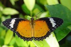 Farfalla su un foglio Immagine Stock