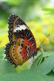Farfalla su un foglio Fotografia Stock
