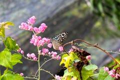 Farfalla su una filiale Immagini Stock Libere da Diritti
