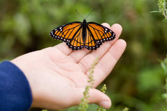 Farfalla su una mano. Immagine Stock