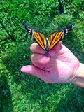 Farfalla su una mano Fotografie Stock