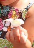 Farfalla su una palla di cotone Fotografia Stock