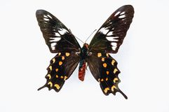 Farfalla su una priorità bassa bianca immagini stock libere da diritti