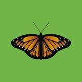 Farfalla su verde Immagine Stock Libera da Diritti