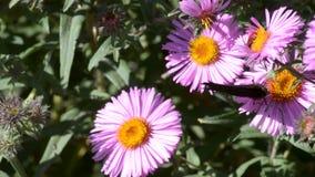 Farfalla sui fiori archivi video
