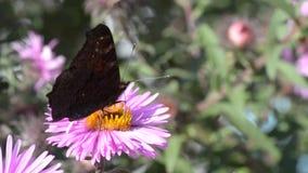 Farfalla sui fiori video d archivio