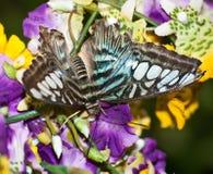 Farfalla sui fiori variopinti Immagine Stock Libera da Diritti