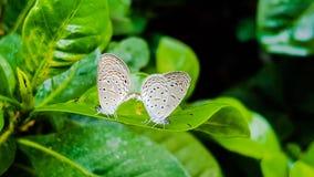 Farfalla sui fogli fotografia stock libera da diritti