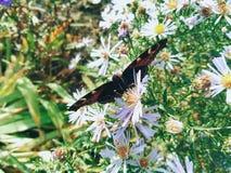 farfalla sui wildflowers su un fondo di erba verde Fotografie Stock Libere da Diritti