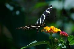 farfalla sul bordo Fotografia Stock Libera da Diritti