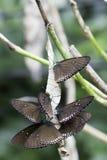 Farfalla sul brance Fotografia Stock Libera da Diritti