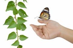 Farfalla sul dito con la pianta Fotografia Stock