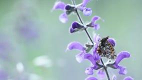 Farfalla sul fiore di estate video d archivio