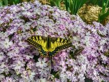 Farfalla sul flover fotografie stock