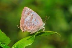 Farfalla sul foglio Fotografia Stock Libera da Diritti