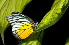 Farfalla sul foglio Immagini Stock Libere da Diritti