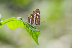 Farfalla sul foglio verde fotografia stock