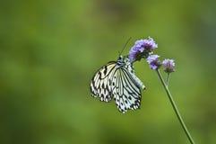 Farfalla sul gambo Immagini Stock Libere da Diritti