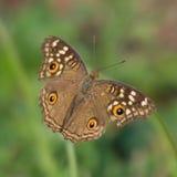 Farfalla sul gambo piegato Immagini Stock Libere da Diritti