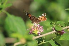 Farfalla sull'affare con un fiore immagini stock libere da diritti