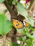Farfalla sull'albero fotografia stock