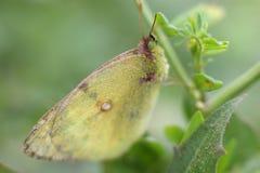 Farfalla sull'erba un giorno di estate nella macro fotografia stock
