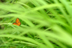 Farfalla sull'erba verde fotografie stock libere da diritti