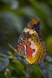 Farfalla sulla foglia Immagine Stock Libera da Diritti