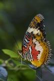Farfalla sulla foglia Fotografia Stock Libera da Diritti