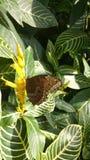 Farfalla sulla foglia fotografia stock