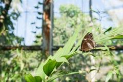 Farfalla sulla foglia verde chiaro nel parco pubblico Immagini Stock Libere da Diritti