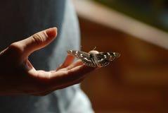 Farfalla sulla mano Immagini Stock Libere da Diritti