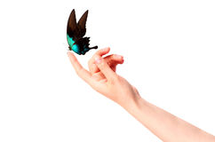 Farfalla sulla mano della donna. Nel moto Immagine Stock