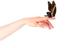 Farfalla sulla mano della donna. Nel moto Immagini Stock Libere da Diritti